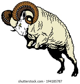 ram sheep attacking pose, image isolated on white