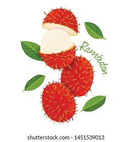 Rambutan, fruit doodle drawings vector illustration.