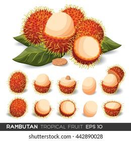 Rambutan Fruit Vector Isolated
