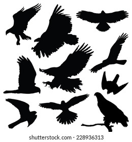 Raptors eagles vector silhouette set - Osprey, Vulture, Buzzard, Marsh Harrier, Golden Eagle, Kestrel, Falcon