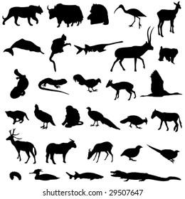 Rare animals unique to China