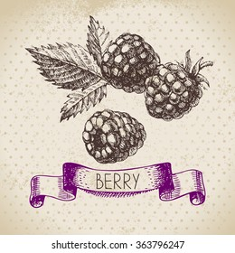 Raspberry. Blackberry. Hand drawn sketch berry vintage background. Vector illustration of eco food