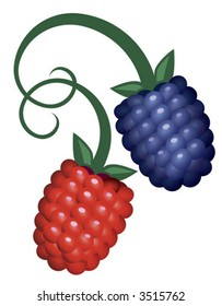 raspberry and blackberry, with stems entwined