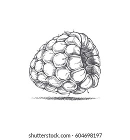Raspberry drawing by hand, delicious ripe berry, vector image, retro style