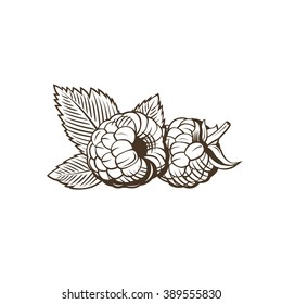 Raspberry in vintage style. Line art vector illustration