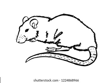 Rat illustration made of stain. Ink hand drawn picture. Can be printed on a t-shirt, postcards, tattoo, books images, etc.