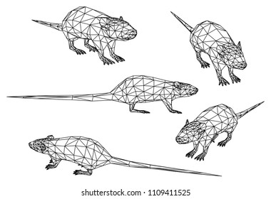 Rat polygonal lines illustration. Abstract vector rat on the white background