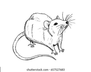 Rat sketch drawn by hand. Black and white vector illustration.