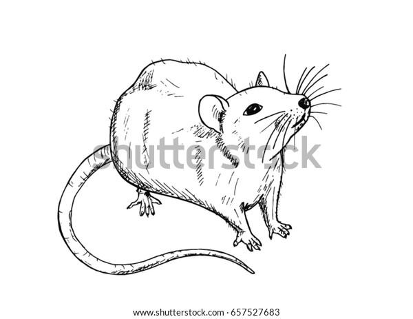 Image Vectorielle De Stock De Dessin De Rat Dessine A La 657527683