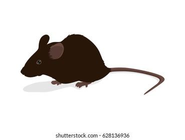 Rat vector illustration