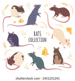 Rats collection. Vector illustration of cartoon, differed colors rats in various poses and actions. Isolated on white.