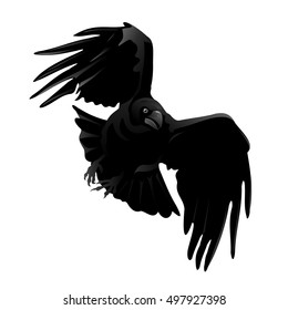 Raven (Corvus corax). Hand drawn vector silhouette of flying attacking raven, detailed in gray and isolated on white background.