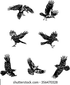 raven, crow, black, vector, drawing, decorative, ornamental, wild, sign, symbol, isolated, illustration,