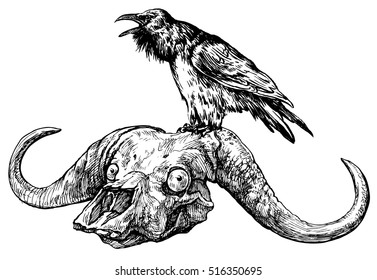 Raven on a skull of buffalo, grunge image - hand drawn vector illustration, isolated on white