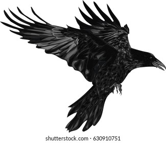 Raven - Vector Illustration