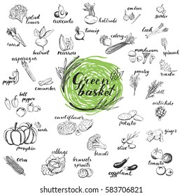 Raw vegetables hand drawn sketches. Organic vegetables for menu design isolated on white background. Green basket healthy food collection.