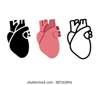 Real human heart in flat style, vector object
