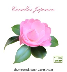 Realestic Blooming Bud of Camellia Japonica. Pink flower with five green leaves. Vector illustration EPS10