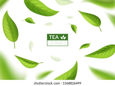 Realistic 3d Detailed Bright Green Tea Leaves Concept Banner Card Background for Ad Business. Vector illustration