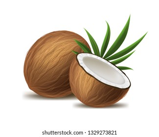 Realistic 3d Detailed Brown Exotic Whole Coconut, Half and Green Leaf. Vector illustration of Fresh Tropical Fruit