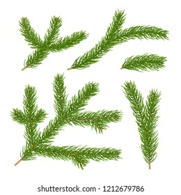 Realistic 3d fir branches collection isolated on white background. Vector illustration of christmas tree branch or spruce twigs top view