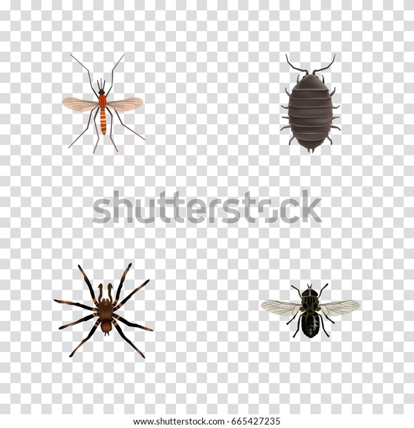 Realistic Arachnid, Gnat, Midge And Other Vector Elements. Set Of Bug Realistic Symbols Also Includes Mosquito, Beetle, Tarantula Objects.
