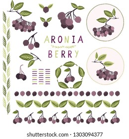 Realistic aronia berry vector illustration clipart set. Hand drawn black chokeberries, leaf elements collection. Juicy natural antioxidants. Nutritional superfruits motif. Fruit label, icon borders