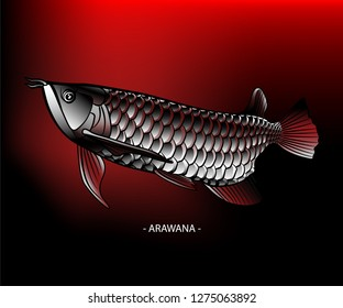 """Realistic """"ASIAN AROWANA"""" illustration on gradient red black background. High details with shiny silver scales, long body and a fierce face. The most popular breed in Asia, also called """"Dragon fish"""""""