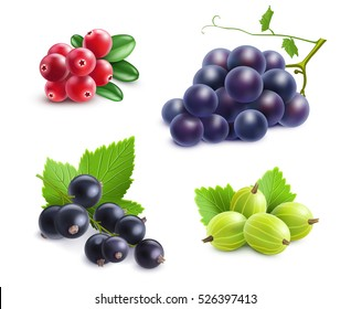 Realistic berries set with cranberry grape gooseberry and black currant on white background isolated vector illustration