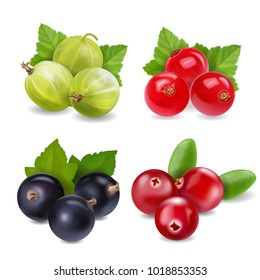Realistic berries set with cranberry, red currants, gooseberry and black currant on white background isolated