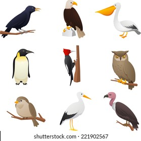 Realistic Bird collection, with Owl, Pelican, Woodpecker, Penguin, Eagle, Bird, cardinal and raven vector illustration.