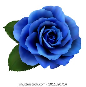 Realistic blue rose, Queen of beauty.
