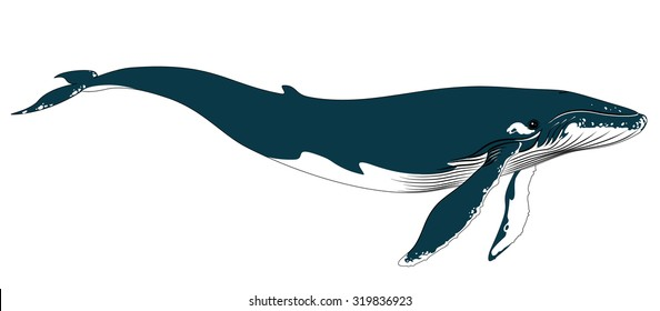 Realistic Blue Whale on a White Background. Vector Illustration in Simple Realistic Style for your design, artworks and journal article. Marine Mammal - Big  Blue Whale. Largest and Heaviest Animal.