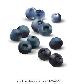 The Realistic Blueberries. Realistic blueberries isolated on white background. Vector illustration EPS 10.