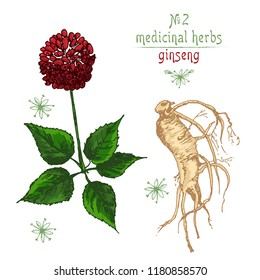 Chinese medicine images stock photos vectors shutterstock realistic botanical color sketch of ginseng root flowers and berries isolated on white background mightylinksfo