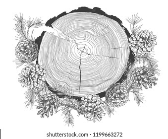 Realistic Botanical ink sketch of fir tree branches with pine cone and tree growth rings trunk isolated on white background. Good idea for templates invitations, greeting cards. Vector illustrations