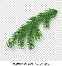 Realistic branch of christmas tree on transparent background. Merry Christmas and Happy New Year decoration. Green fir tree branch vector illustration. Fresh conifer plant detailed element.