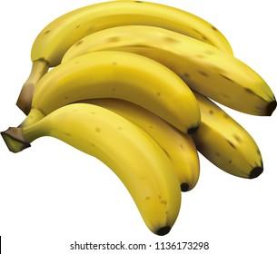 Realistic bunch of bananas