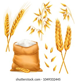 Realistic bunch of wheat, oats or barley with bag of flour isolated on white background. Vector set of wheat ears. Grains of cereals. Harvest and agriculture theme. Ingredient element. 3d illustration