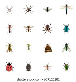 Realistic Butterfly, Bug, Midge And Other Vector Elements. Set Of Hexapod Realistic Symbols Also Includes Spider, Dor, Butterfly Objects.