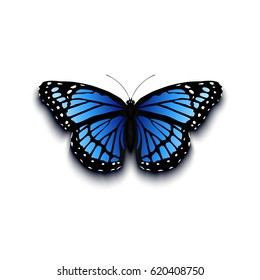Realistic butterfly icon isolated on white background. Vector illustration.