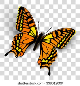 Realistic butterfly on transparent background