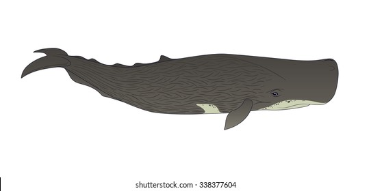 Realistic Cachalot. Vector Illustration of Sperm Whale in Simple Realistic Style on a White Background for your design, artworks and journal article. Marine Mammal, Oceanic Animal.