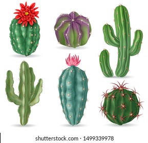 Realistic cactus. Decorative desert cactuses plants for mexican landscape and house interior. 3d succulent cacti isolated vector set