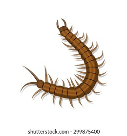 Realistic centipede with shadow isolated on white background. vector illustration.