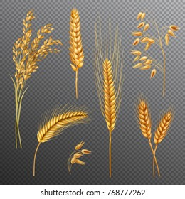 Realistic cereals set with rice, oats, spikelets of wheat and barley isolated on transparent background vector illustration