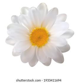 Realistic Chamomile Flower on White Background. Vector Illustration EPS10