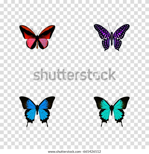Realistic Copper, Polyommatus Icarus, Common Blue And Other Vector Elements. Set Of Beauty Realistic Symbols Also Includes Butterfly, Hairstreak, Bluewing Objects.