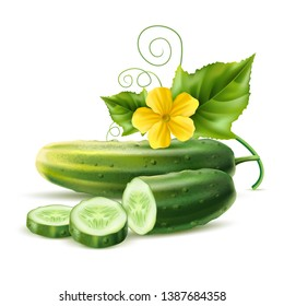 Realistic cucumber with green stem leaves and flower. Vector organic vegetable package design element. Healthy fresh cucumber slices with haulm. Agricultural product, seeds design.