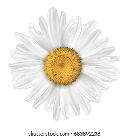 A realistic daisy. Isolated on white background.